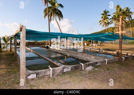 Giant Clam Farm, Tridacna gigas, Makogai, Lomaviti, Fiji - Stock Photo