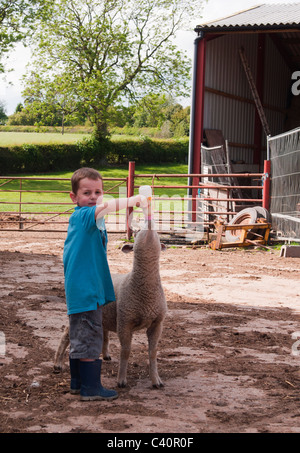Spring lamb being fed by young Boy - Stock Photo