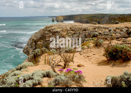 Section of the Great Ocean Walk with Gibson Beach west ahead in the Port Campell National Park, Great Ocean  Road, - Stock Photo