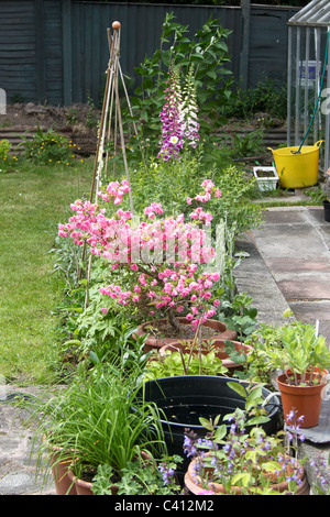 Typical english garden plants flowers typical english for Typical landscaping plants