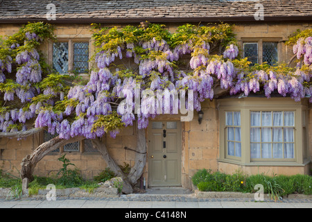 wisteria on a house wall in the village of broadway the cotswolds england gb uk eu europe - Stock Photo