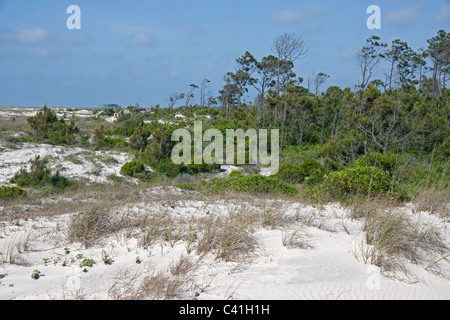 Sand dunes and Maritime forest St George Island State Park Gulf of Mexico Florida USA - Stock Photo