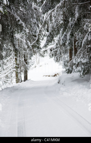 Snow-covered path through woods - Stock Photo