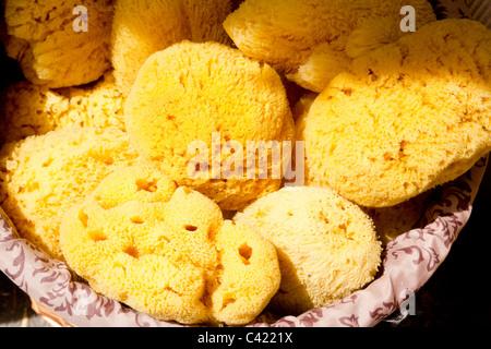 marine yellow bath sponge pattern texture background - Stock Photo
