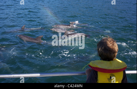 A young boy watches Dolphins in playful mood in Queen Charlotte Sound, South Island, New Zealand. - Stock Photo