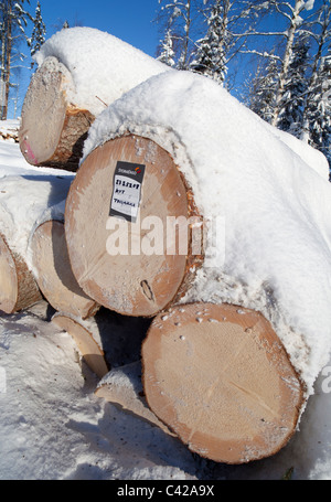 Sold and tagged top quality spruce ( picea abies )  and pine ( pinus sylvestris ) logs - Stock Photo