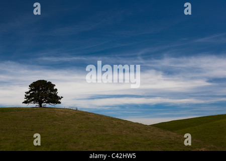 Lone tree on hilltop, Victoria, Australia - Stock Photo