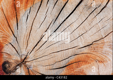 Split dead tree trunk pattern - Stock Photo