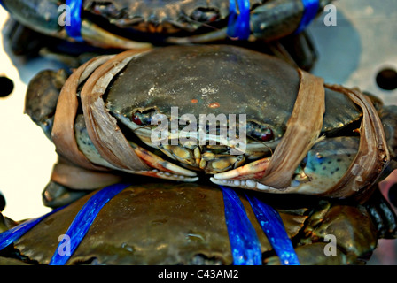 Close-up of Live Soft-shell Blue Crabs ready for sale at a seafood restaurant in Bangkok, Thailand - Stock Photo