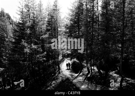 Alpe Devero, Alps, Italy. Mountain woods. Couple on a track - Stock Photo