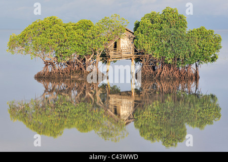 Fisherman's hut and reflection in calm sea among mangrove trees at sunrise - Stock Photo