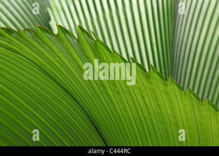 Tropical palm leaves - Stock Photo
