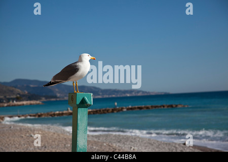 Seagull perched on pole looking over the water on beach - Stock Photo