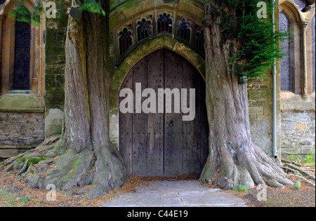 Yew trees lining North Door of St. Edward`s Church, Stow-on-the-Wold, Gloucestershire, England, UK - Stock Photo