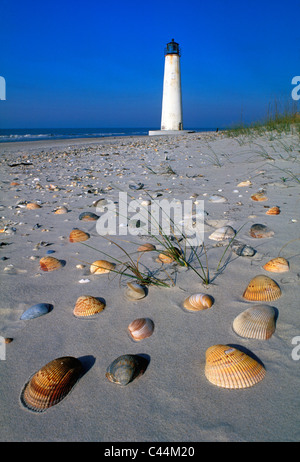 Seashells on the Beach near Cape Saint George Lighthouse in Franklin County, Florida - Stock Photo