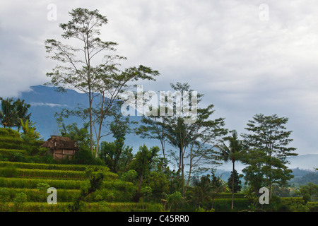 Sacred GUNUNG AGUNG the tallest mountain on the island is seen through RICE TERRACES along SIDEMAN ROAD - BALI, - Stock Photo