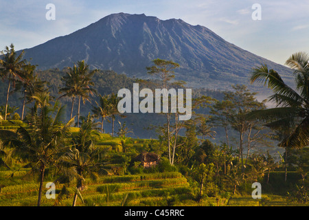 Sacred GUNUNG AGUNG the tallest mountain on the island is seen through RICE TERRACES and COCONUT PALMS along SIDEMAN - Stock Photo