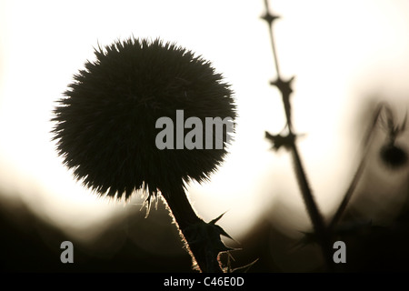 Photograph of a field in northern Israel - Stock Photo