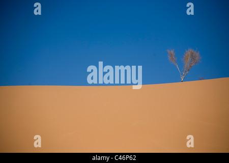 Photograph of a single shrub on a sand dune in the Jordanian desert - Stock Photo