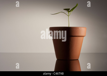 seedling in a terracotta pot - Stock Photo