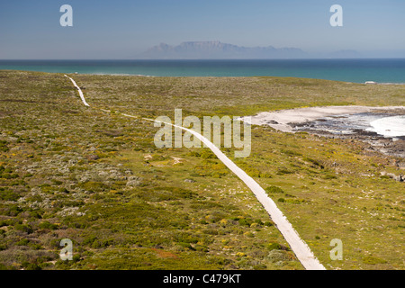 Aerial view of a dirt road running along Bokpunt on the west coast north of Cape Town in South Africa. - Stock Photo