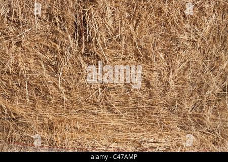 Detail of straw round bale, straw textured background. - Stock Photo