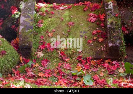 Fallen red maple leaves on moss-covered bridge at Shoyo-en Garden, Rinno-ji Temple, Nikko, Tochigi Prefecture, Japan. - Stock Photo