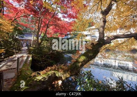 Gardeners raking leaves at Shoyo-en Garden, Rinno-ji Temple, Nikko, Tochigi Prefecture, Japan. - Stock Photo