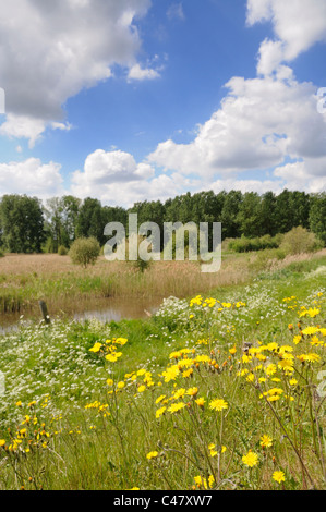 Inland waterway and reedbed, RSPB Lakenheath Fen, Suffolk, England, May - Stock Photo