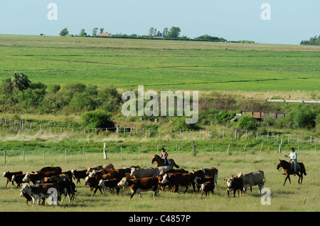 URUGUAY agriculture and livestock , Gauchos with horse and cow cattle on grasslands - Stock Photo