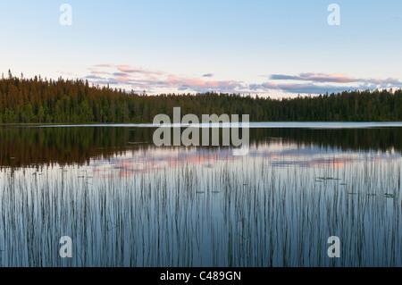 Abendstimmung an einem Waldsee, Rena, Hedmark, Norwegen, Evening mood, Lake, Norway - Stock Photo