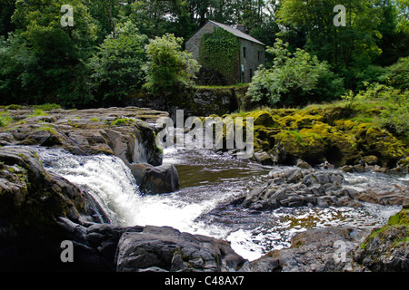 Cenarth falls with old water mill on river Teifi . Pembrokeshire Ceredigion Wales - Stock Photo