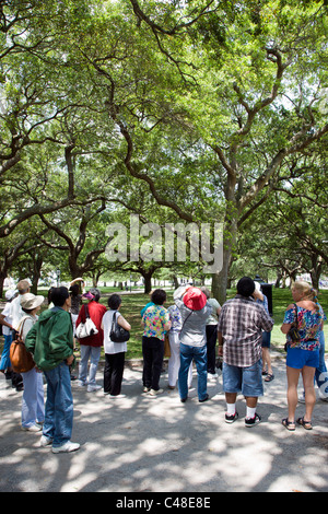 Japanese tourists looking up at Live Oak trees in The Battery Park, south end of the penninsula in historic Charleston, - Stock Photo
