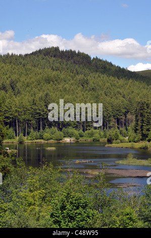 Forestry plantation surrounding a lake at Nant yr Arian, in the Cambrian Mountains of west Wales. - Stock Photo