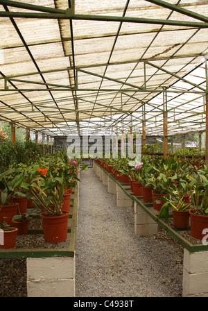 Costa Rica Cartago Lankester Botanical Gardens Cloud Forest Bromeliad Stock Photo Royalty Free