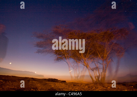 photograph of a tree in the Central Negev desert at Night - Stock Photo