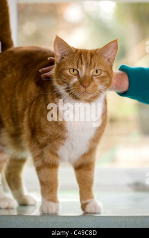 dating for cat owners Join match maker pet to breed your pets in auckland nz we are registered breeders and have experience in pet breeding of cats, dogs, birds, rabbits, horses etc adopt a pet or find a playmate for your pet.