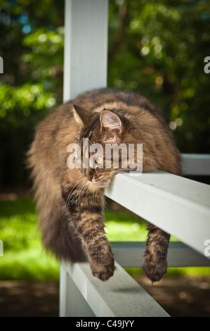 Cat sprawled over railing - Stock Photo