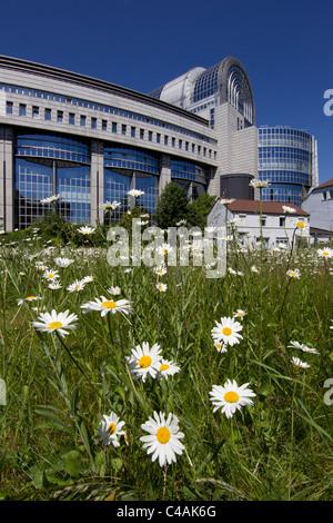 european parliament building brussels - Stock Photo