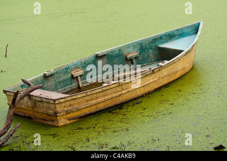floating on algae old rustic rowing boat on lake in india - Stock Photo