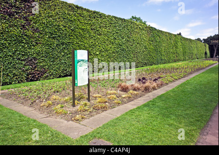 Famous 8 metre high and over 100 years old beech hedge in the Royal Botanic Garden Edinburgh Scotland - Stock Photo