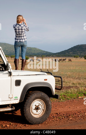 Tanzania, Serengeti. A tourist stands on the bonnet of her Land Rover to look at the wildebeest. MR. - Stock Photo