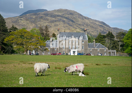 Sheep graze peacefully in front of Lochbuie House, on the west coast of the isle of Mull, Scotland.  SCO 7142 - Stock Photo