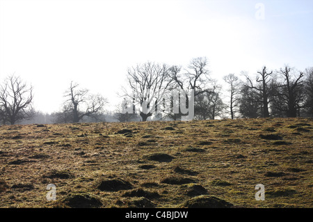 Misty winter morning in the park - Stock Photo