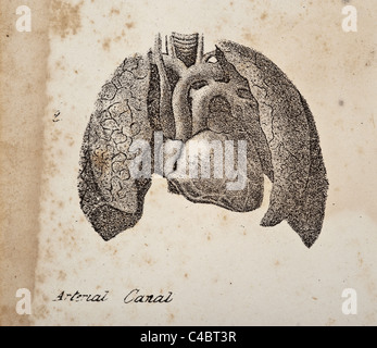 Illustration of the Arterial Canal - Stock Photo