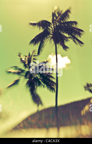 coastline of tropical Lord Howe Island. photographed with lens baby for dreamy abstract effect. - Stock Photo