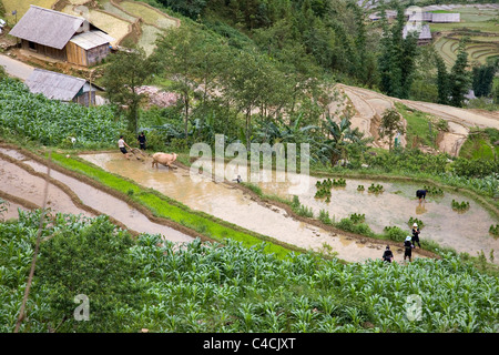 View from above over Rice Paddies in Cat Cat Village - Stock Photo