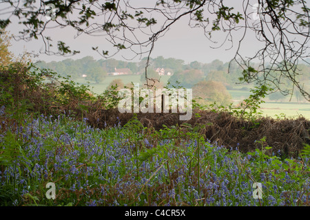 English countryside in Spring, with bluebell woods and rolling hills and fields. - Stock Photo