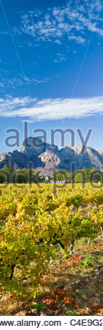 Boschendal Wine Estate at the foot of the Groot Drakenstein mountains, near Cape Town, South Africa - Stock Photo