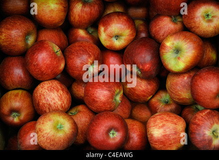 ORGANIC RED APPLES - Stock Photo
